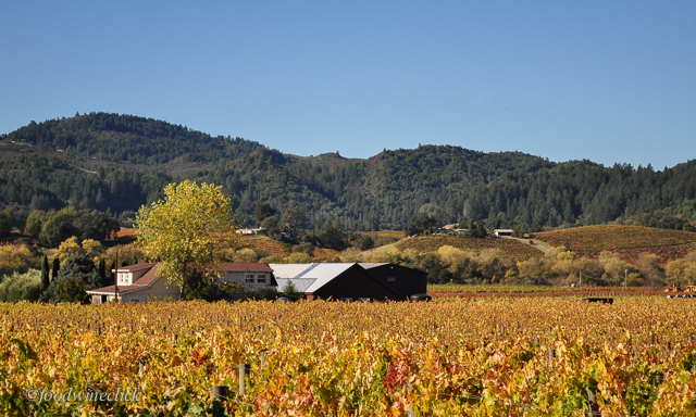 The winery is surrounded by some of the Unti Vineyards