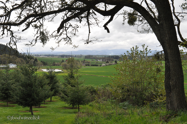 A beautiful spring view of the Willamette Valley from the Evesham Wood winery.