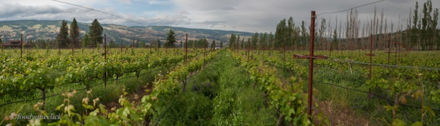View looking north towards the Columbia River.