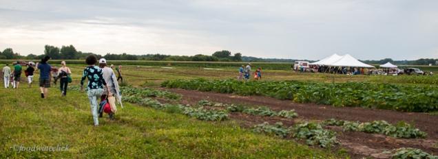 our csa farm field