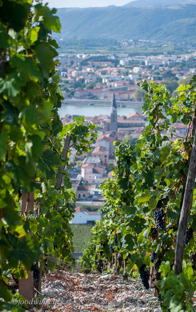 View from the Chave vineyard on Hermitage