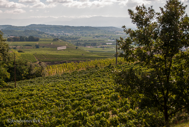 Crozes-Hermitage includes vast areas of flat ground away from the riverside slopes