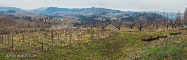 Vineyard view to the north, Mosier