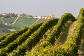 Barbaresco in the Piemonte