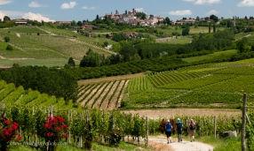 Vineyard hike to Neive