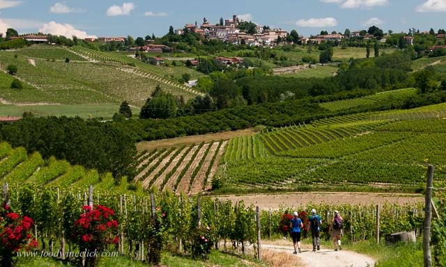 Vineyard hike to Neive