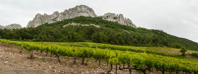 You'll find vineyards right below the Dentelles peaks