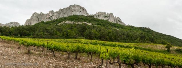 You'll find vineyards right below the Dentelles peaks