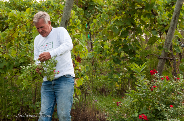 Lin Deardorff gives hayride style tours of the apple orchard and vineyard