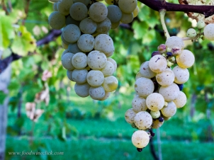 four_daughters_winery_20140926_22