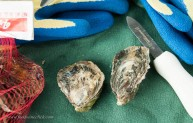 Cortes Island oysters from British Columbia (Oyster of the week at Coastal Seafoods)