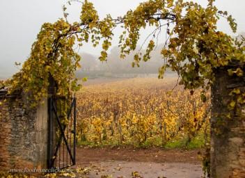 Clos St. Jean, another 1er Cru vineyard
