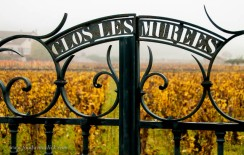 Just a little clos in Chassagne-Montrachet