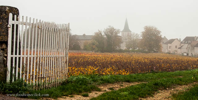 Chassagne-Montrachet in the fog