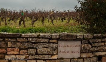 "A ""Clos"" is a vineyard surrounded by a stone wall"