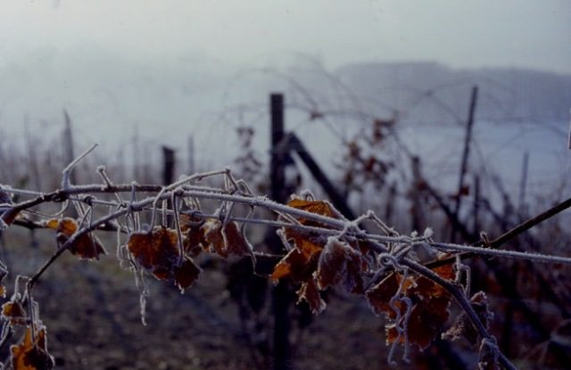 LAND - 33 - winter vineyards 27