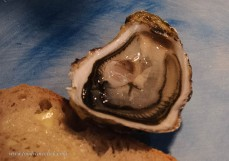French oysters from the Marennes-Oléron