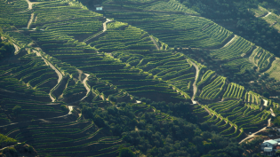 You'll travel 100 miles up the Douro to the vineyards