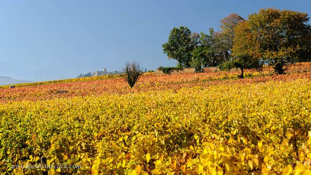 Beaujolais vineyard in the fall