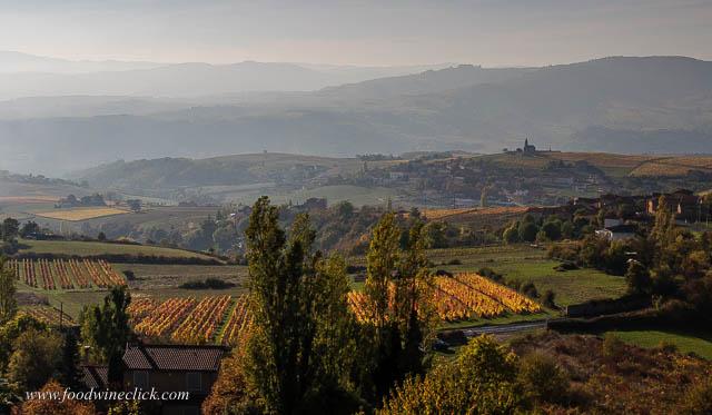 Beaujolais vineyards in autumn