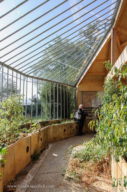 greenhouse at Chateau Buffavent
