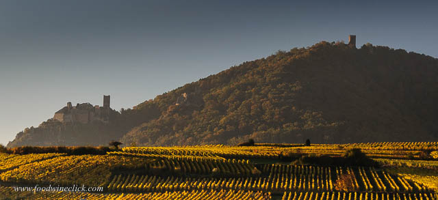 Beautiful vineyards and hillside castles in Alsace near Ribeauville