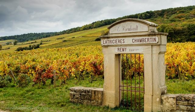 Vineyard view in Morey St. Denis in Burgundy