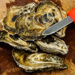 Misty point oysters from Virginia