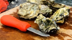 Nisqually oysters