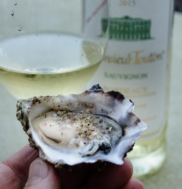 raw oyster and Bordeaux blanc