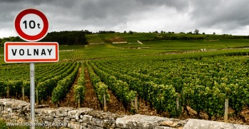 Volnay vineyards in Burgundy