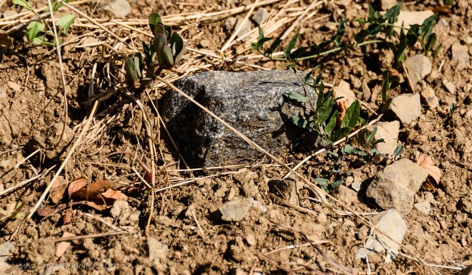 Vineyard soil in Morgon