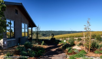 Vineyard and herb gardens at Littorai