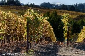 Littorai Pivot vineyard