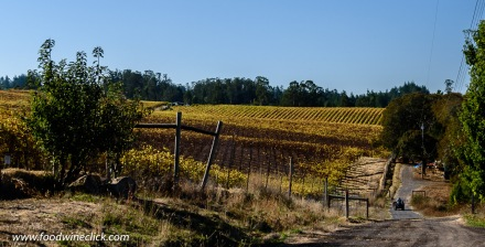 Sonoma vineyard in the fall