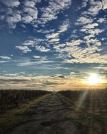 photo courtesy of Vignobles Mercadier http://www.vignoblesmercadier.com/fr/journal.html