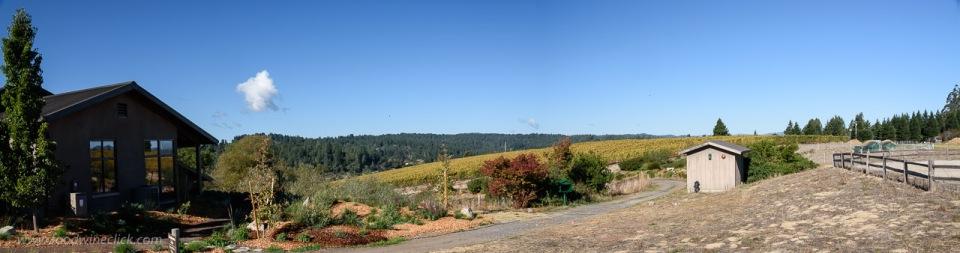Pivot vineyard at Littorai Wines