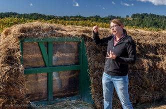 Our guide, Casey, explained the importance of compost. Different from typical compost where a high temperature is required to kill all the bugs, Biodynamic compost is managed to avoid excessive heat. Think of it as fermentation!