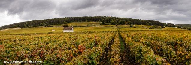 Vineyard view in Gevrey-Chambertin