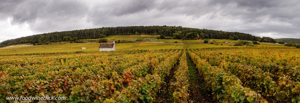 Vineyard view in Gevrey-Chambertin