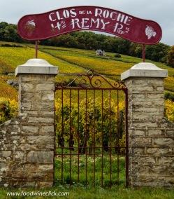 Clos de la Roche vineyard in Morey-Saint-Denis