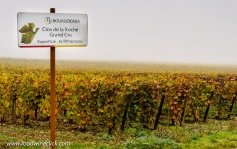 Grand Cru vineyards can be on surprisingly flat ground