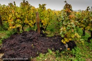 Grape pomace (seeds, skins & stems) returned to the vineyard for fertilizer