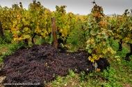 Grape pomace (seeds, skins & stems) returned to the vineyard for fertilizer