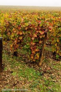 Soil in Clos de la Roche Grand Cru vineyard