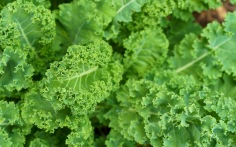 Kale of course