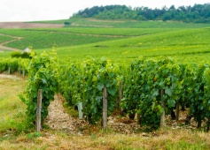 I love to stand in the place, see the soil, see the vines, feel the weather....