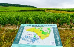 Look at the sign, then look up to your favorite Grand Cru vineyard.