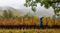 We had a post harvest rainy day for our visit, but the mist was beautiful.