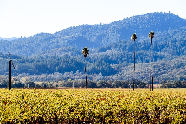 Duckhorn Three Palms Vineyard